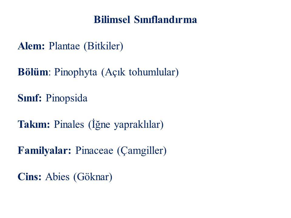 Bilimsel Sınıflandırma Alem: Plantae (Bitkiler) Bölüm: Pinophyta (Açık tohumlular) Sınıf: Pinopsida Takım: Pinales (İğne yapraklılar) Familyalar: Pinaceae (Çamgiller) Cins: Abies (Göknar)