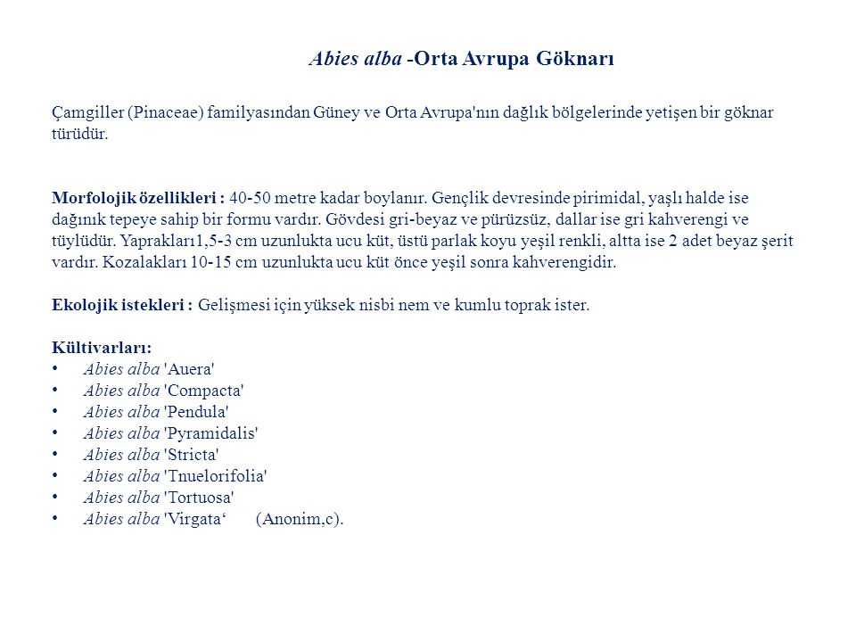 Abies alba -Orta Avrupa Göknarı