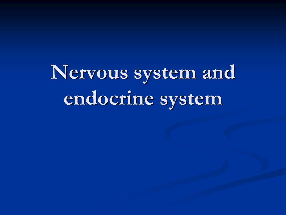 Nervous system and endocrine system
