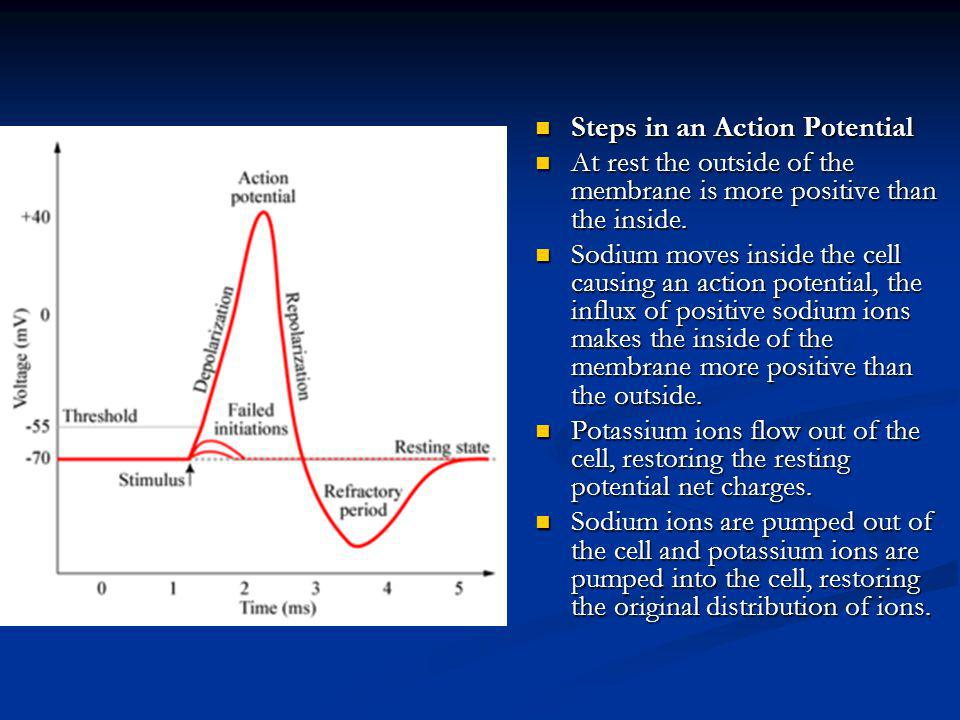 Steps in an Action Potential