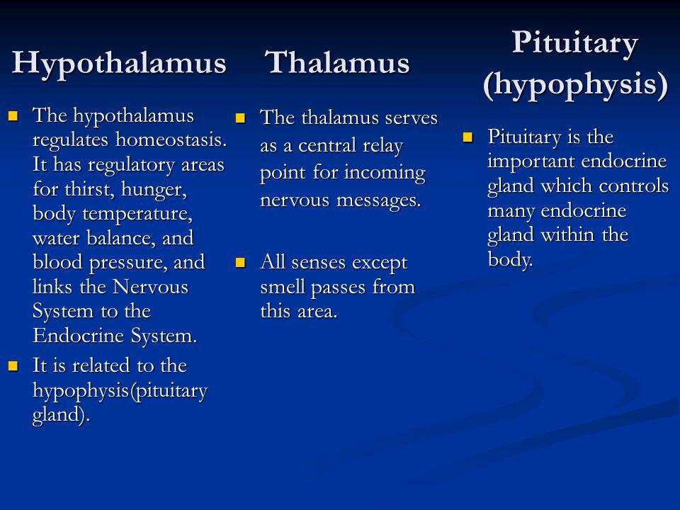 Pituitary (hypophysis)