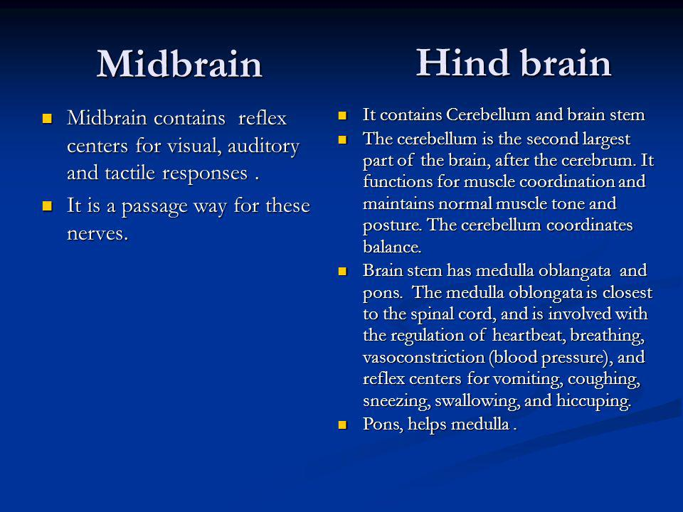 Midbrain Hind brain. Midbrain contains reflex centers for visual, auditory and tactile responses .