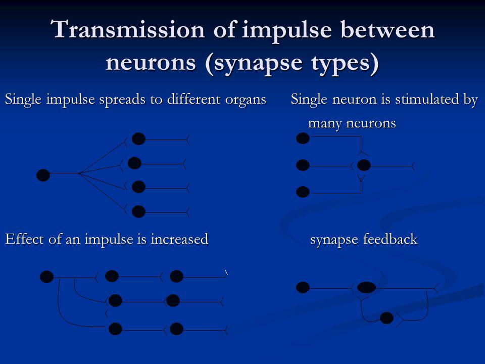 Transmission of impulse between neurons (synapse types)