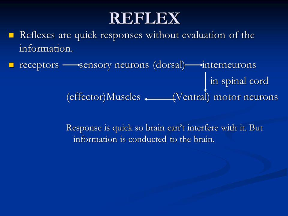 REFLEX Reflexes are quick responses without evaluation of the information. receptors sensory neurons (dorsal) interneurons.
