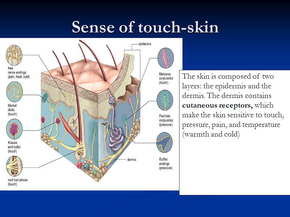 Sense of touch-skin