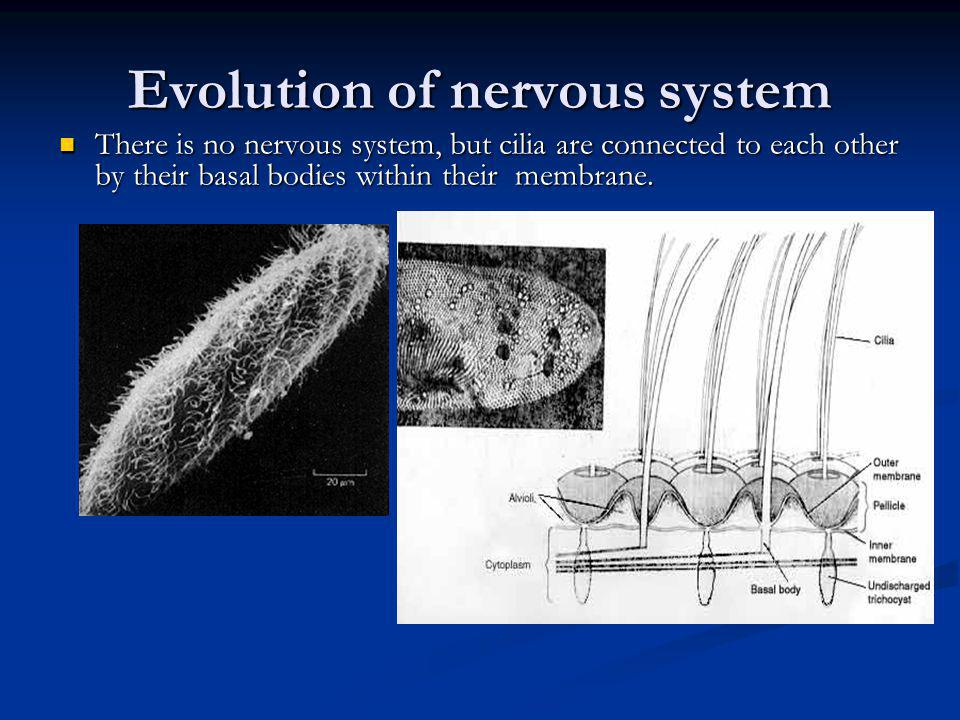 Evolution of nervous system