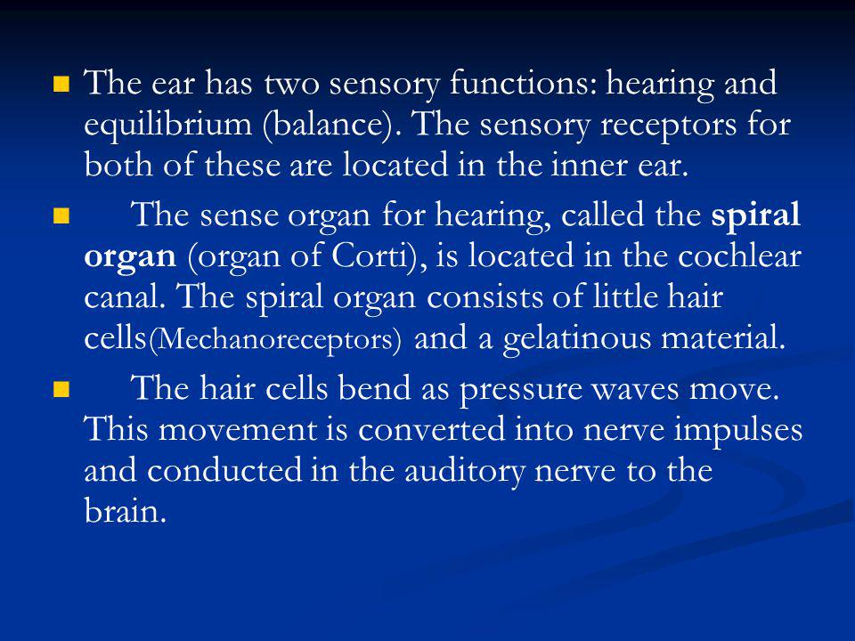 The ear has two sensory functions: hearing and equilibrium (balance)