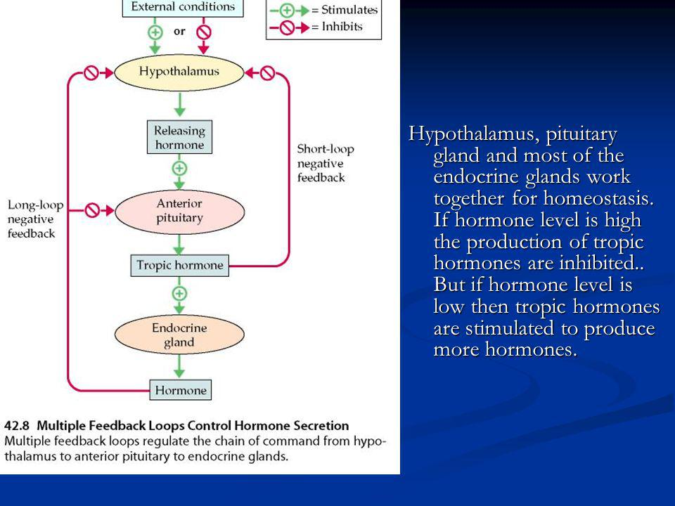 Hypothalamus, pituitary gland and most of the endocrine glands work together for homeostasis.