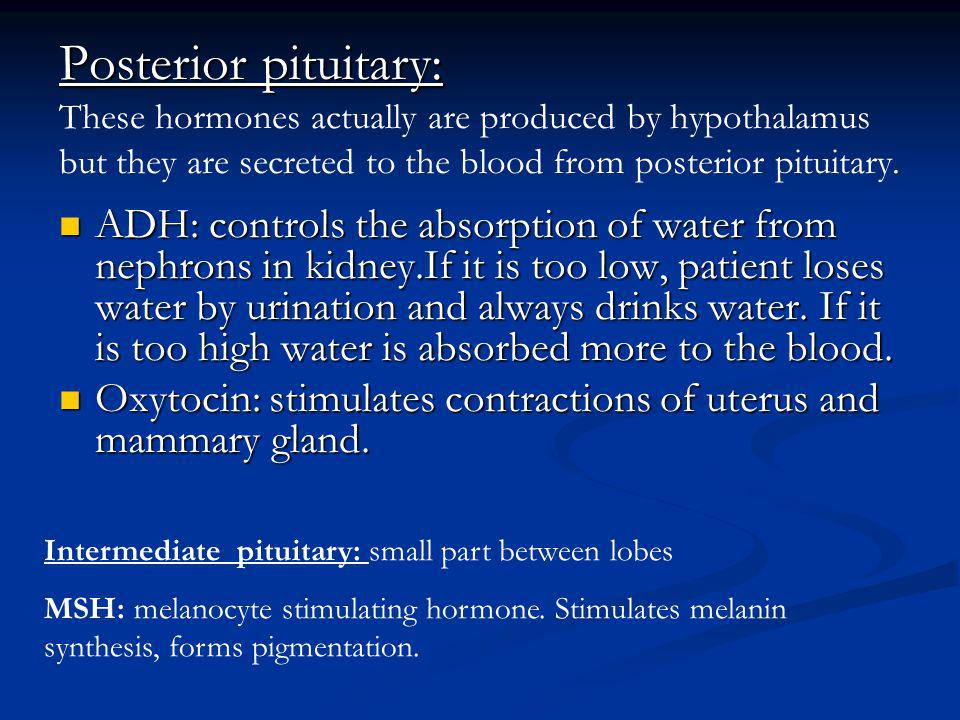 Posterior pituitary: These hormones actually are produced by hypothalamus but they are secreted to the blood from posterior pituitary.