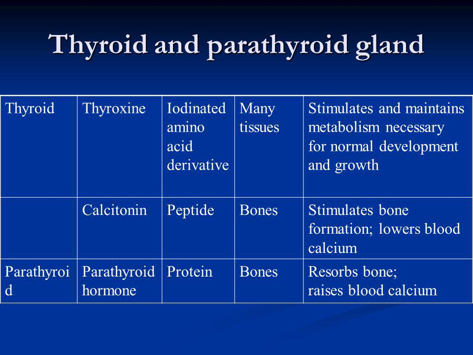 Thyroid and parathyroid gland