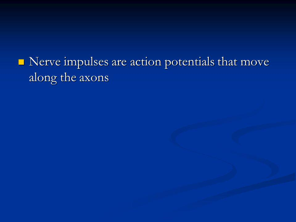 Nerve impulses are action potentials that move along the axons
