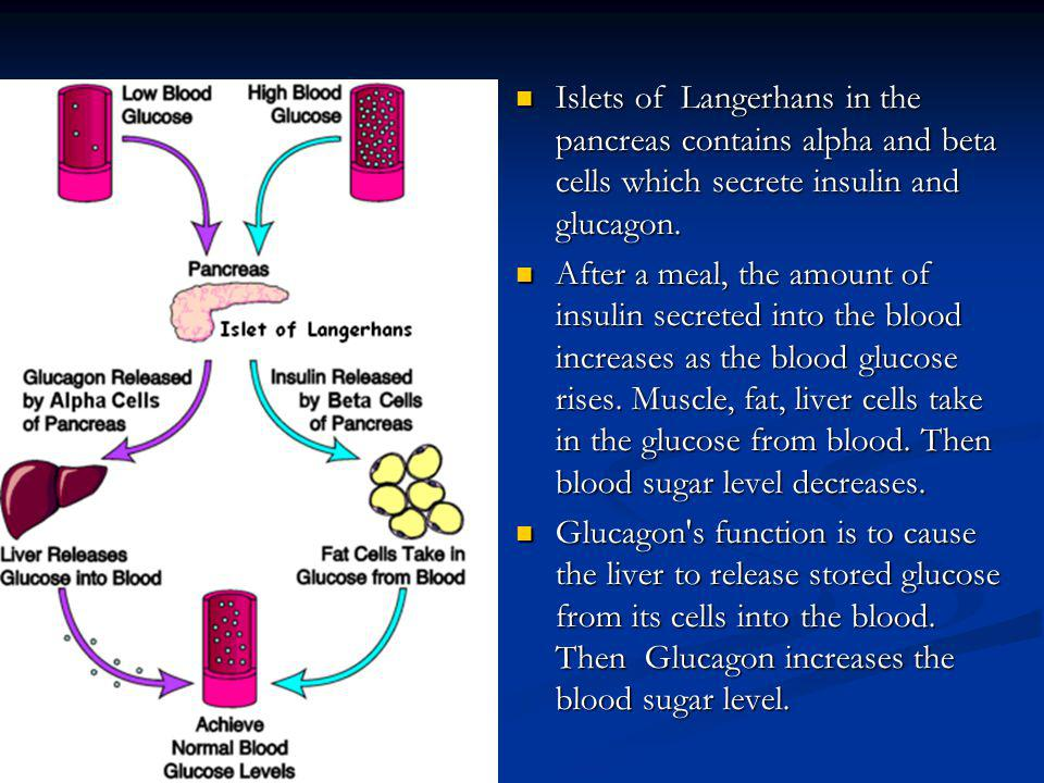 Islets of Langerhans in the pancreas contains alpha and beta cells which secrete insulin and glucagon.
