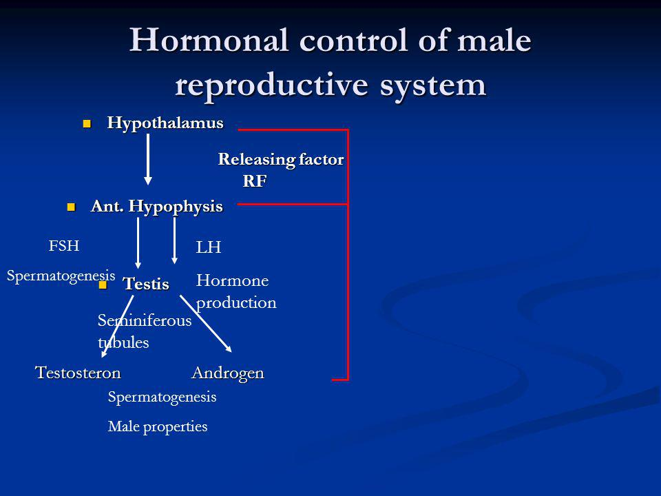 Hormonal control of male reproductive system