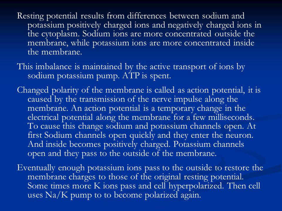 Resting potential results from differences between sodium and potassium positively charged ions and negatively charged ions in the cytoplasm. Sodium ions are more concentrated outside the membrane, while potassium ions are more concentrated inside the membrane.