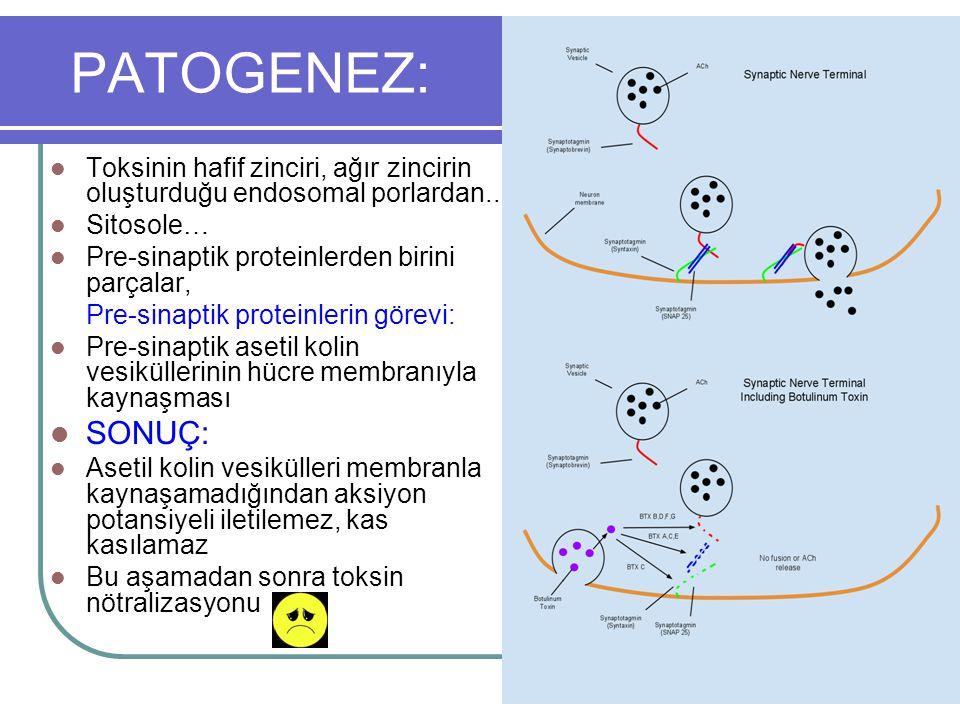 PATOGENEZ: Toksinin hafif zinciri, ağır zincirin oluşturduğu endosomal porlardan.. Sitosole… Pre-sinaptik proteinlerden birini parçalar,