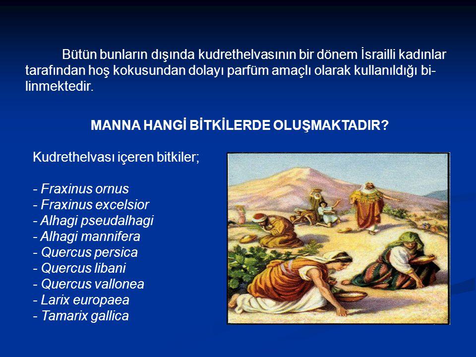 MANNA HANGİ BİTKİLERDE OLUŞMAKTADIR