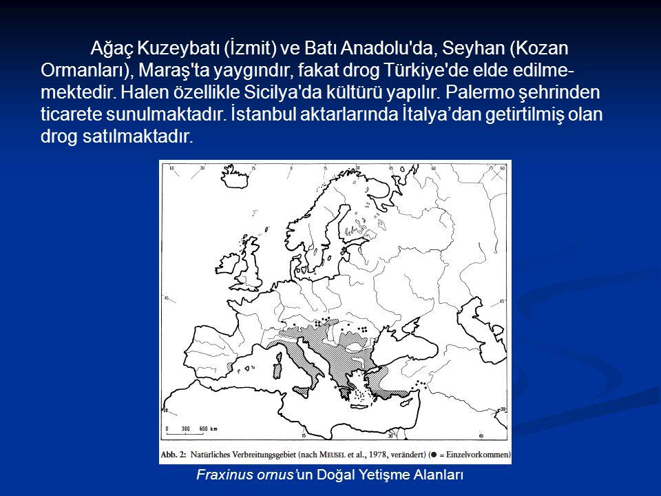 Fraxinus ornus'un Doğal Yetişme Alanları