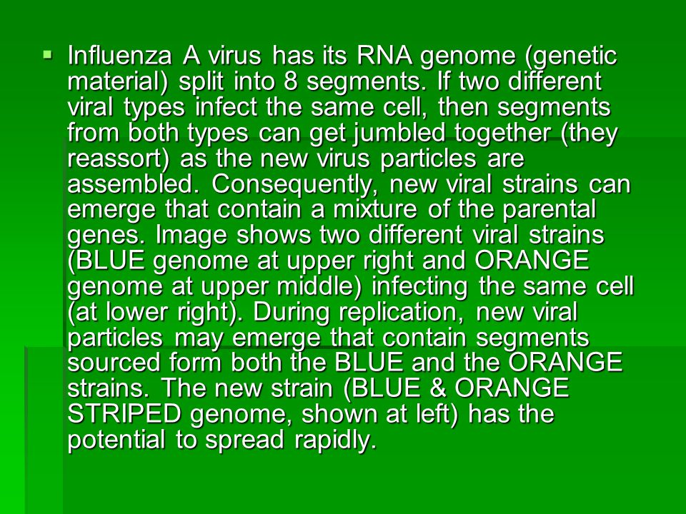 Influenza A virus has its RNA genome (genetic material) split into 8 segments.