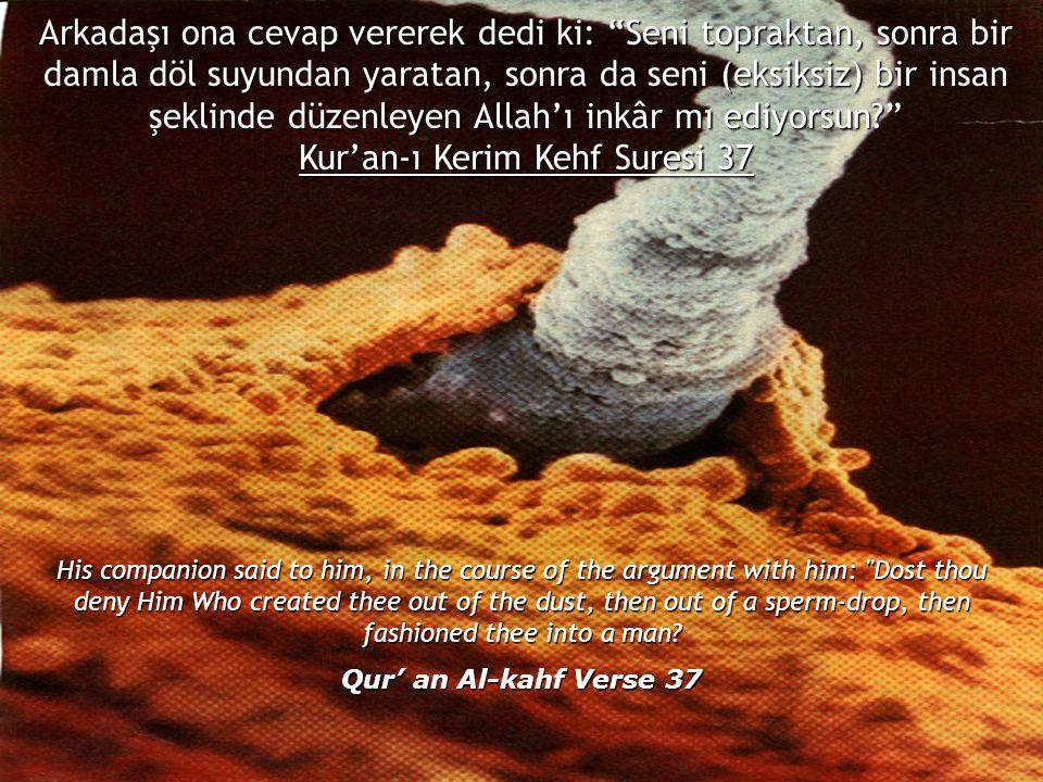 Kur'an-ı Kerim Kehf Suresi 37