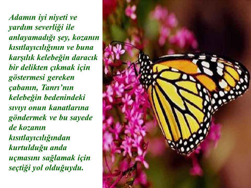 Adamın iyi niyeti ve yardım severliği ile anlayamadığı şey, kozanın kısıtlayıcılığının ve buna karşılık kelebeğin daracık bir delikten çıkmak için göstermesi gereken çabanın, Tanrı'nın kelebeğin bedenindeki sıvıyı onun kanatlarına göndermek ve bu sayede de kozanın kısıtlayıcılığından kurtulduğu anda uçmasını sağlamak için seçtiği yol olduğuydu.
