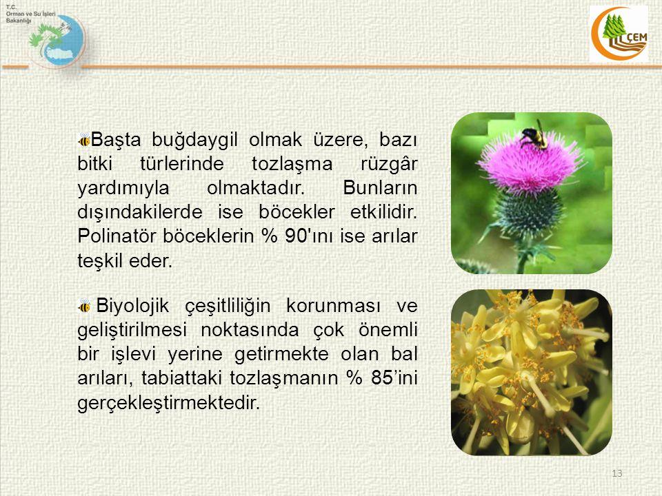 Başta buğdaygil olmak üzere, bazı bitki türlerinde tozlaşma rüzgâr yardımıyla olmaktadır. Bunların dışındakilerde ise böcekler etkilidir. Polinatör böceklerin % 90 ını ise arılar teşkil eder.