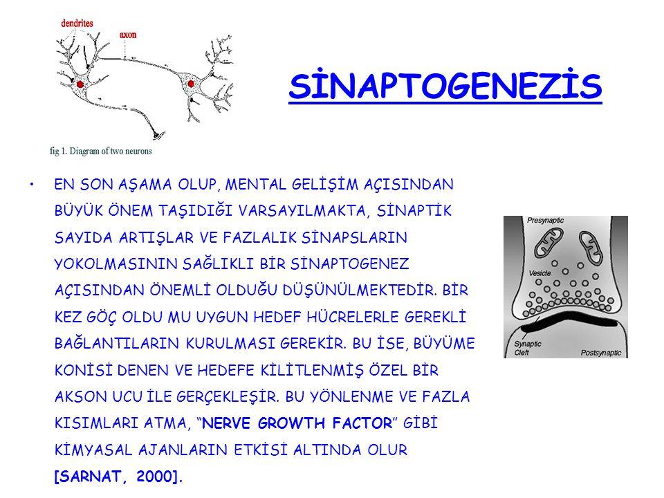 SİNAPTOGENEZİS