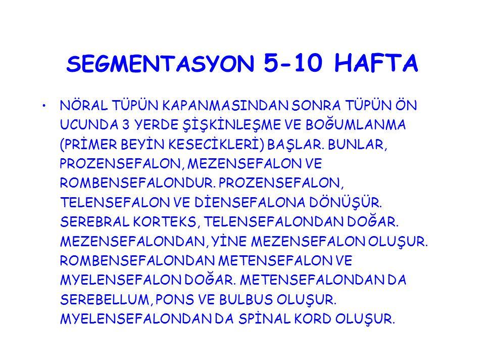 SEGMENTASYON 5-10 HAFTA