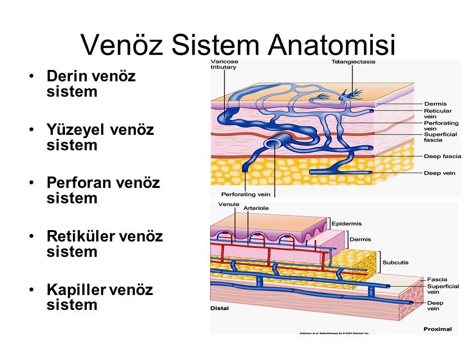 Venöz Sistem Anatomisi