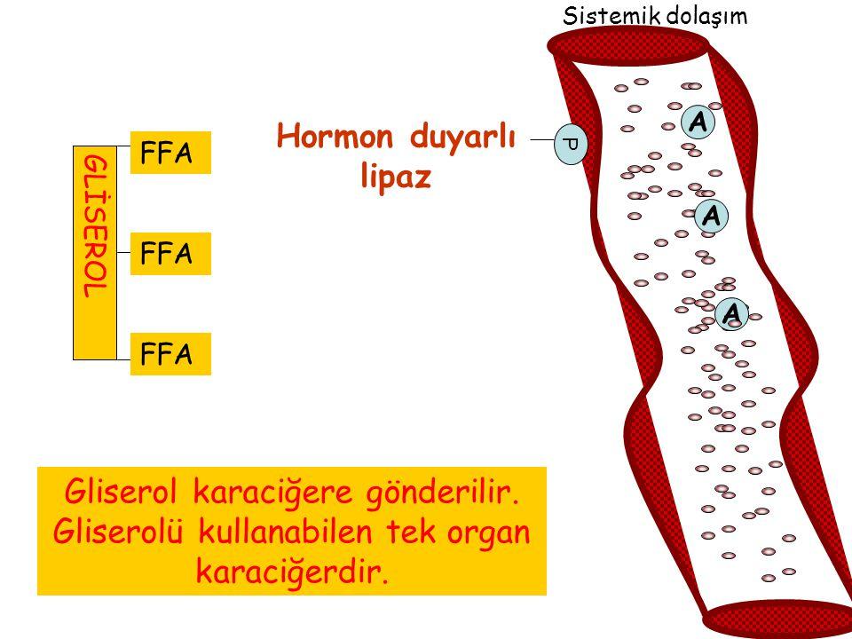 Hormon duyarlı lipaz FA FA FA