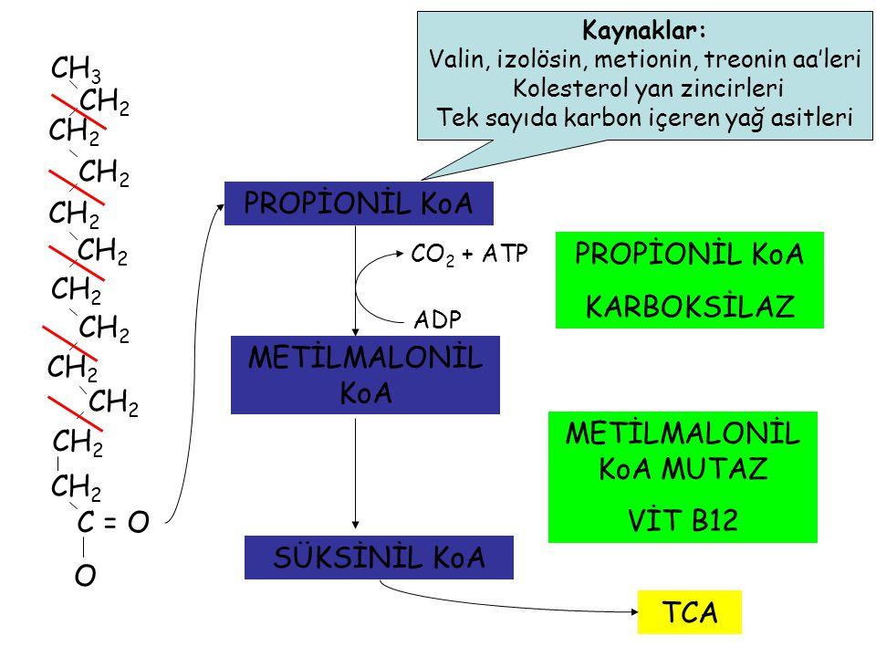 METİLMALONİL KoA MUTAZ VİT B12 CH2