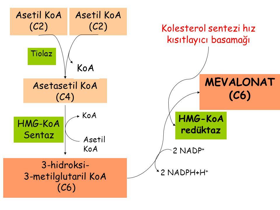 Kolesterol sentezi hız kısıtlayıcı basamağı