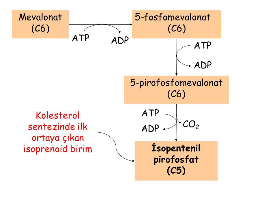 İsopentenil pirofosfat