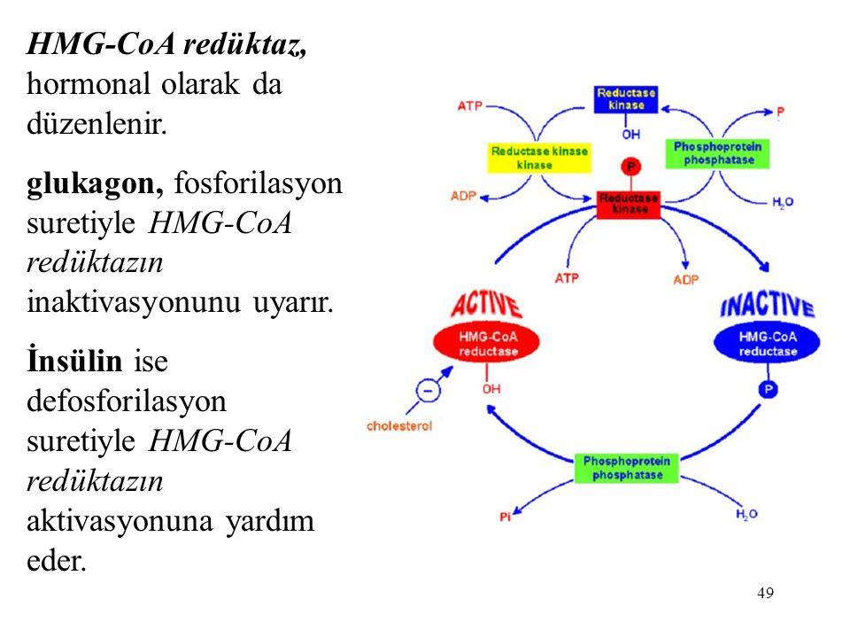 HMG-CoA redüktaz, hormonal olarak da düzenlenir.
