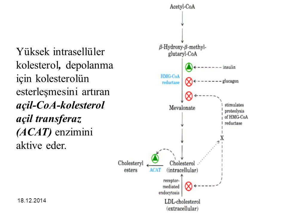 Yüksek intrasellüler kolesterol, depolanma için kolesterolün esterleşmesini artıran açil-CoA-kolesterol açil transferaz (ACAT) enzimini aktive eder.