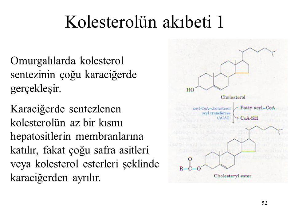 Kolesterolün akıbeti 1 Omurgalılarda kolesterol sentezinin çoğu karaciğerde gerçekleşir.