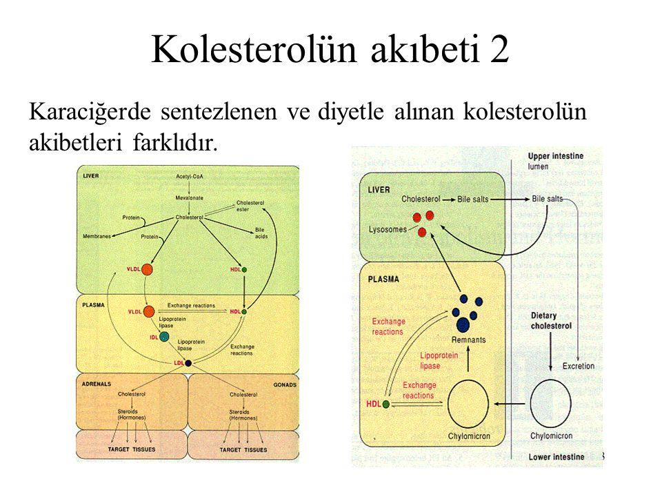 Kolesterolün akıbeti 2 Karaciğerde sentezlenen ve diyetle alınan kolesterolün akibetleri farklıdır.