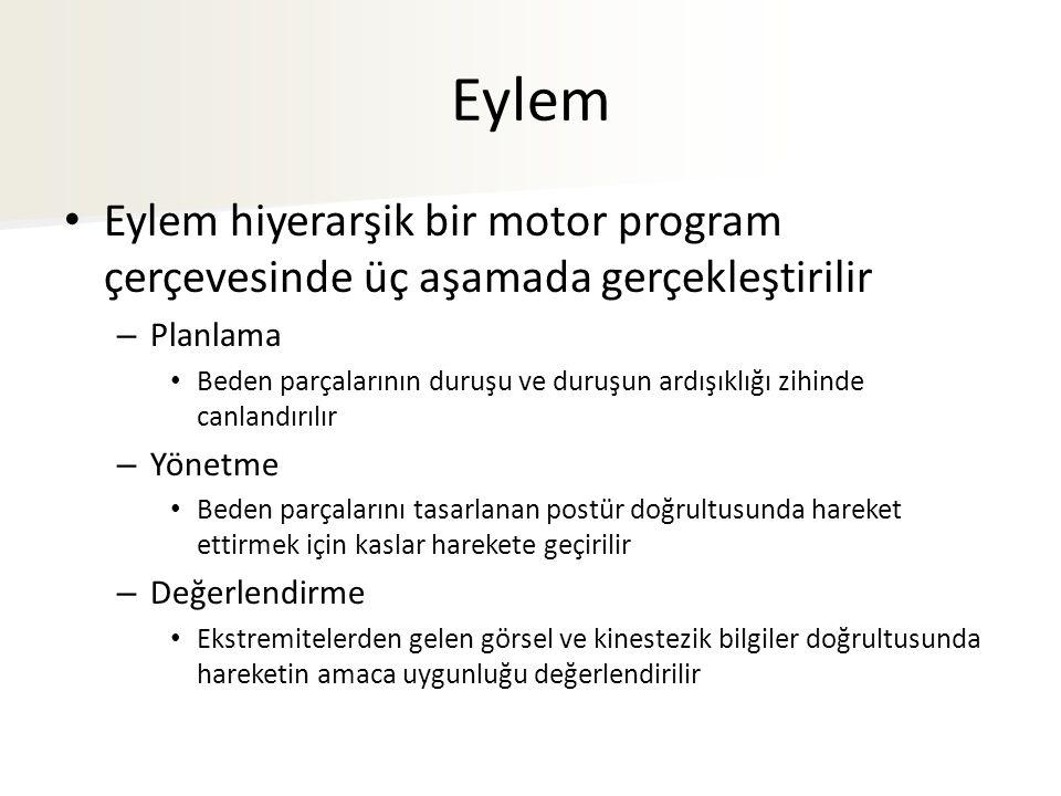 Eylem Eylem hiyerarşik bir motor program çerçevesinde üç aşamada gerçekleştirilir. Planlama.