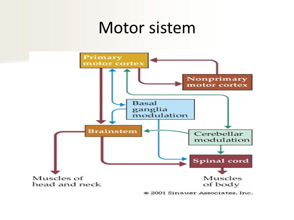 Motor sistem