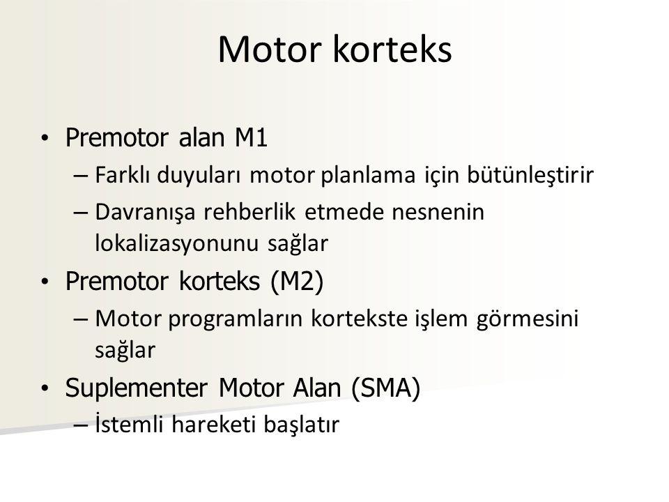 Motor korteks Premotor alan M1