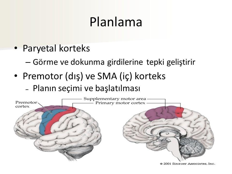 Planlama Paryetal korteks Premotor (dış) ve SMA (iç) korteks