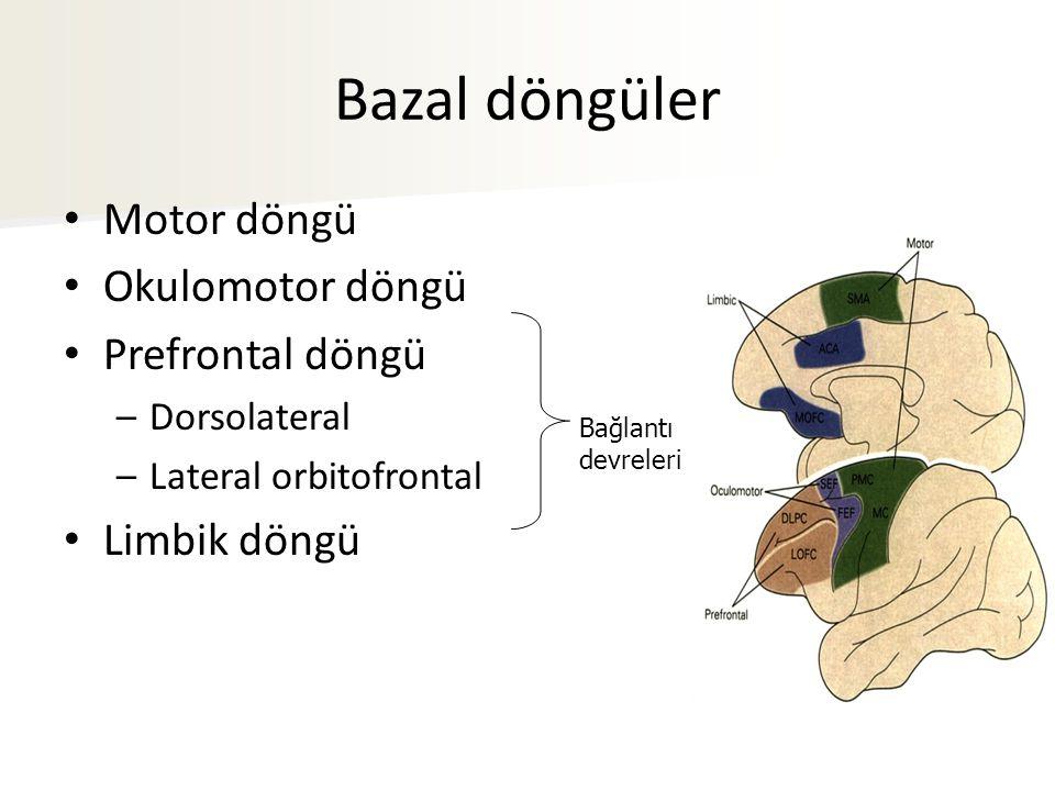 Bazal döngüler Motor döngü Okulomotor döngü Prefrontal döngü