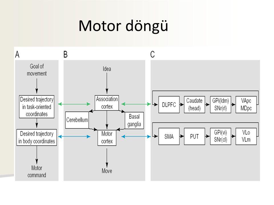 Motor döngü
