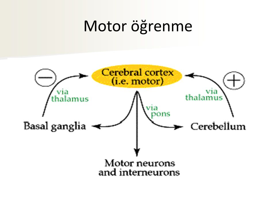 Motor öğrenme