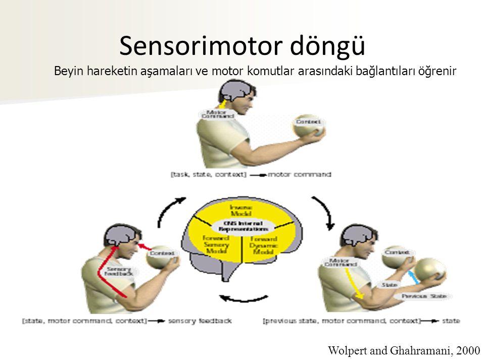 Sensorimotor döngü Beyin hareketin aşamaları ve motor komutlar arasındaki bağlantıları öğrenir.
