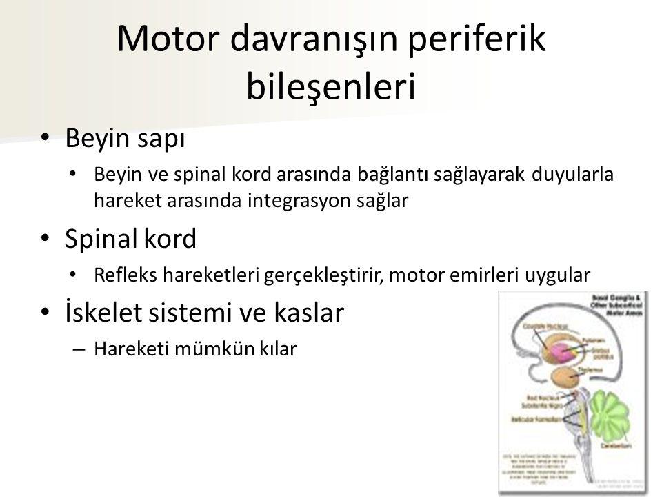 Motor davranışın periferik bileşenleri