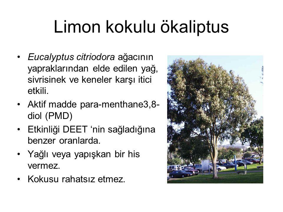Limon kokulu ökaliptus