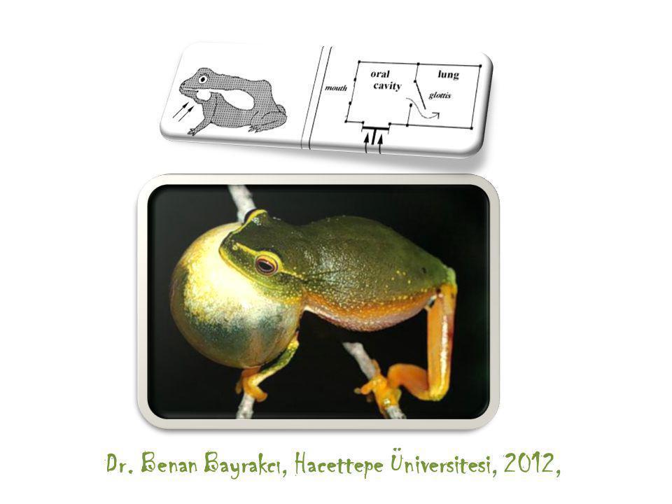 Dr. Benan Bayrakcı, Hacettepe Üniversitesi, 2012,