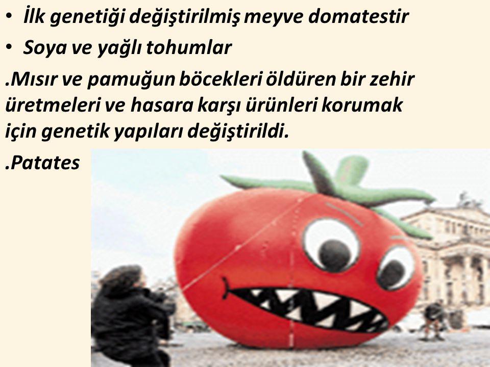 İlk genetiği değiştirilmiş meyve domatestir