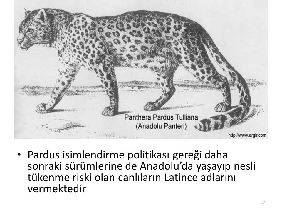 Pardus isimlendirme politikası gereği daha sonraki sürümlerine de Anadolu'da yaşayıp nesli tükenme riski olan canlıların Latince adlarını vermektedir