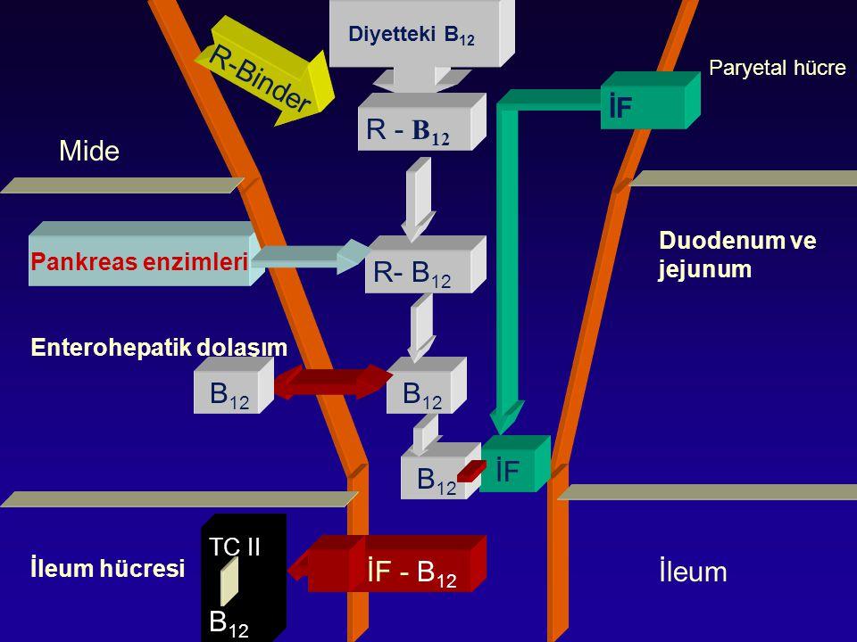 R-Binder İF R - B12 Mide R- B12 B12 B12 İF B12 B12 İF - B12 İleum